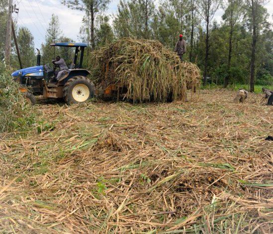 Is it Gloom, Hope for Sugarcane Farmers in Kenya?