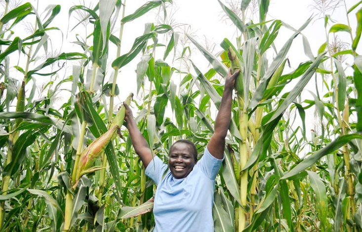 Food security: Think of the Smallholder Farmers