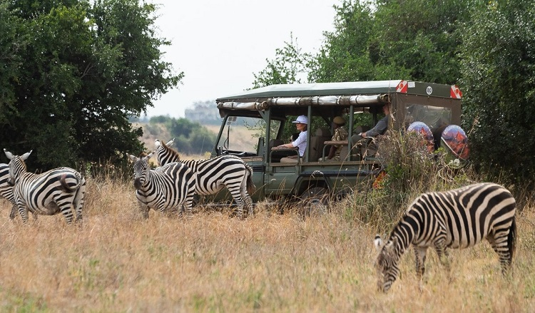 Boost for Kenya tourism sector, as visitor numbers up 37pct in 2018