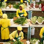Horticulture earns Kenya KSh153Bn in 2018