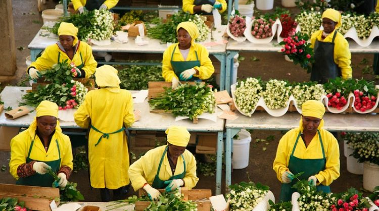 Steady Recovery Seen in Kenya's Flower Industry, But No Freight Capacity