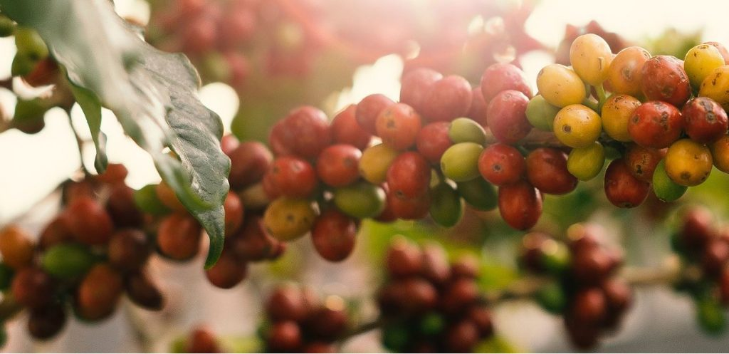 The Capital Markets Authority (CMA) has set a July 1 deadline for coffee brokers to get new licences