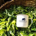 High Labour Costs Push Williamson Tea Kenya to Issue Profit Warnings