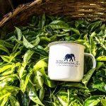 Williamson Tea Kenya Reverse Losses to Post FY Net Profit of KSh 137 Million