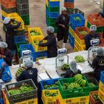 Twiga Foods, Jumia  Partner to Distribute Same-day Fresh Produce in Nairobi
