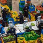 Twiga Foods, Jumia Partner to Distribute Same-day Fresh Produce in Nairobi