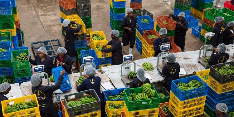 Twiga Foods,Jumia Partner to Distribute Same-day Fresh Produce in Nairobi