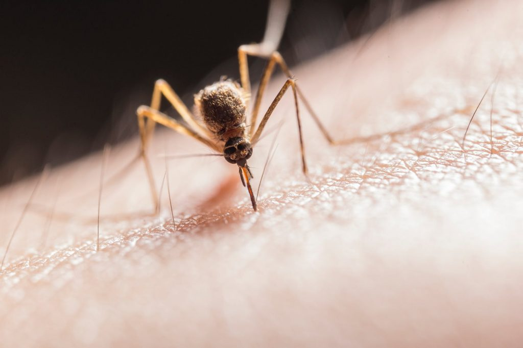 Kenya Introduces Malaria Vaccine, Third in Africa