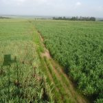 Kenya Appoints Interim Management Committee to Oversee Leasing State-Owned Sugar Mills