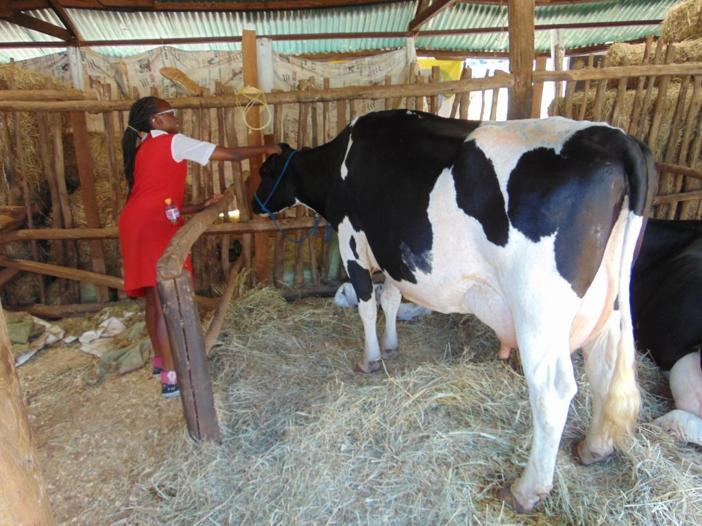 Kenya joins the International Dairy Federation (IDF) as official members