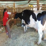 Margaret Kibogy to Lead Kenya National Committee for International Dairy Federation