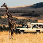 8 Top Rated Safari Countries in Africa in 2020