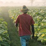 British American TobaccoAcquires19.9%Stake inOrganiGram