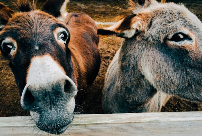 The High Court has removed prohibition for the slaughter of donkeys after the state failed to respond to an application challenging the legal notice.
