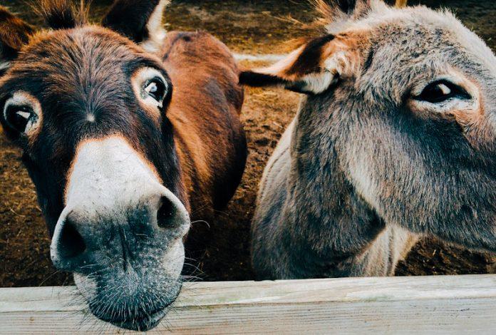 Kenyan Donkeys Face 'Bleak Future' As Court Reverses Ban on Slaughter