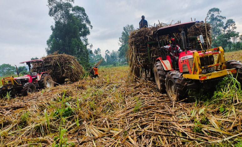 Kenya Write-off Ksh 62 Billion in Historic Sugar Sub-sector Debt