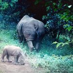 Nairobi National Park Welcomes Baby White Rhino, One Year After Sudan's Death