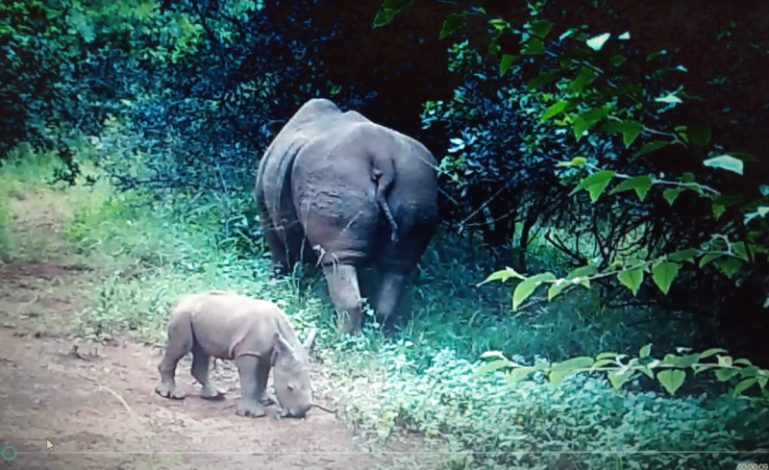 white rhino Nairobi national park