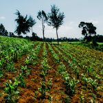 Ksh 5.1 billion AgriBiz Programme Launched to Create Jobs Kenya's in Agricultural Value Chain