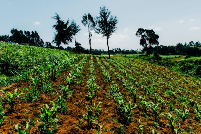 Western Kenya region residents depend on agriculture for their livelihood, yet sector inefficiency is widespread across the region and the rest of the country.