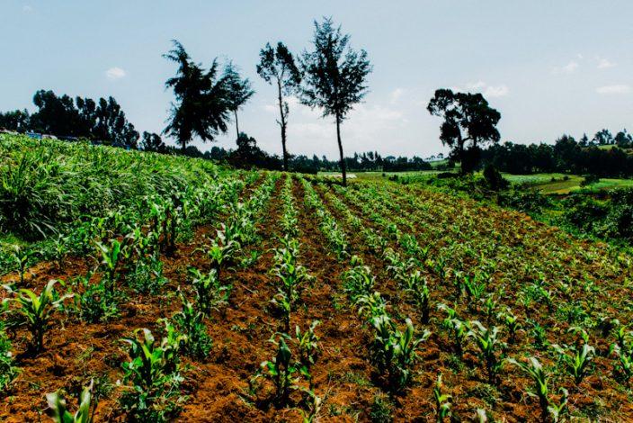 Ksh 5.1 billion AgriBiz Programme