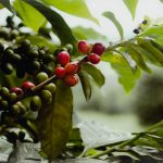CMA Issues First Set of Licenses to 5 Coffee Brokers
