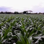 Team Europe Allocates Ksh 2.4Bn to Bolster Food Security in Kenya
