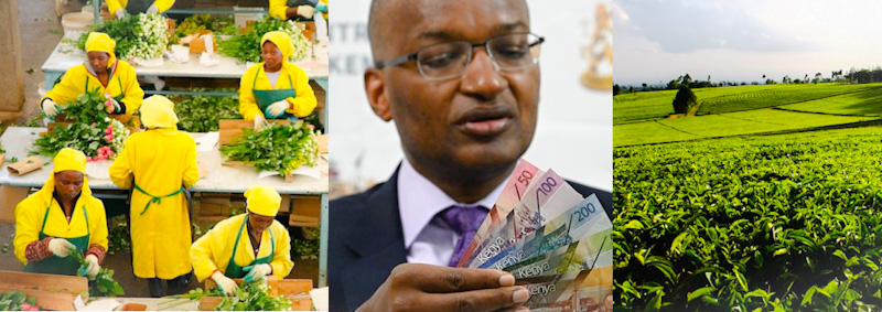 Remittances in Kenya are the biggest source of foreign exchange, ahead of tourism, tea, coffee, and horticulture exports.