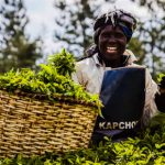 Kapchorua Tea Kenya Posts KSh19.4 Million Profit, Declares Ksh 10.00 Dividend