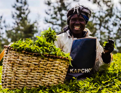 A market report from the East African Tea Traders Association (Eatta) indicates the price of the beverage declined to Sh181 last week, down from Sh187 that was realised in the previous sale.