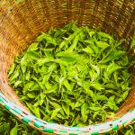 Kenya Tea Exports Fall in First 8 Months of 2020 on Reduced Demand