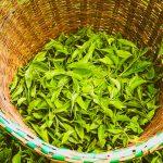 Kenya Half-year Tea Earnings Drop by KSh5 billion