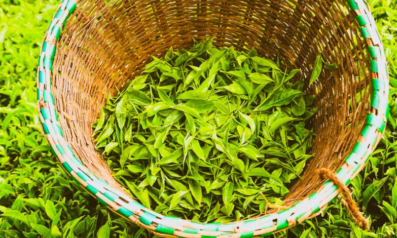Kenya Tea Exports Fall in First 8 Months of 2020