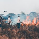 Arson-caused Tsavo National Park Fire Contained: KWS