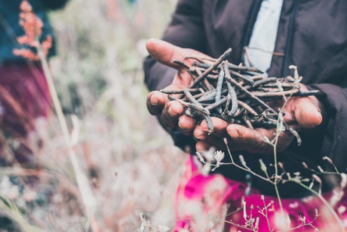 Pula, a Kenyan insurtech startup that specialises in digital and agricultural insurance to derisk millions of smallholder farmers across Africa, has closed a Series A investment of $6 million.