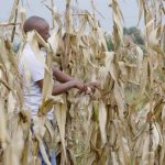 Pula Wins 2020 InsurTech of the Year ward for Helping Smallholder Farmers